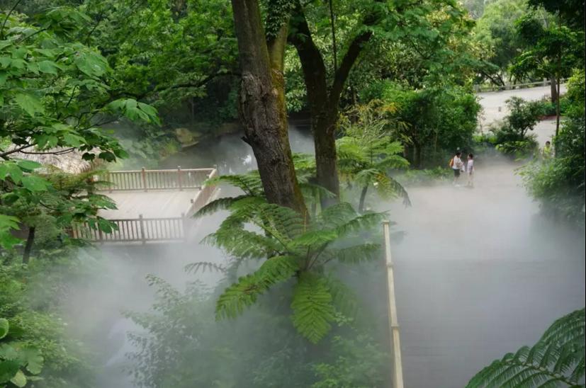 你所忽略的厦门万石植物园之热带雨林
