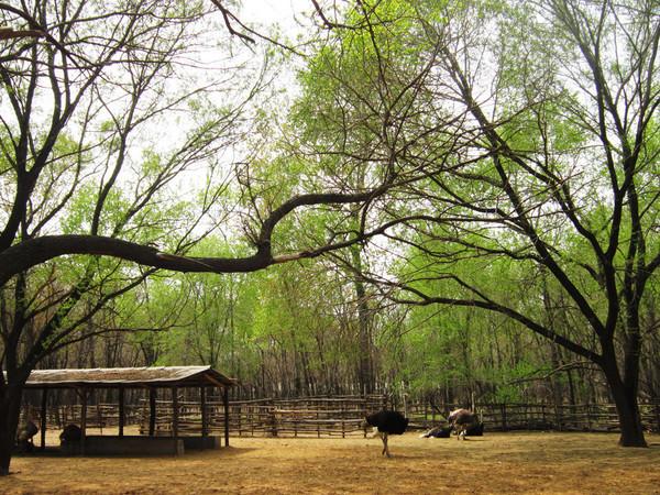 壁纸 垂柳 电脑 风景 风景壁纸 柳树 摄影 树 桌面 600_450