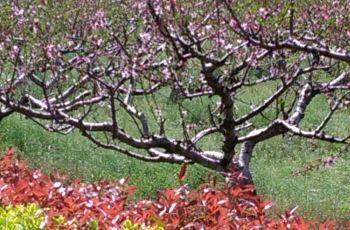 【携程果园】瑞华攻略攻略,崇明区瑞华门票攻家庭影院装修果园图片