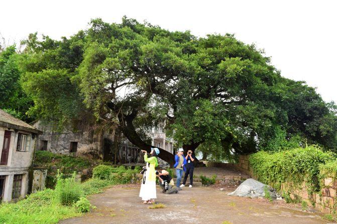蒲城古城墙上的百年大树,成为古城一道独特的风景线.
