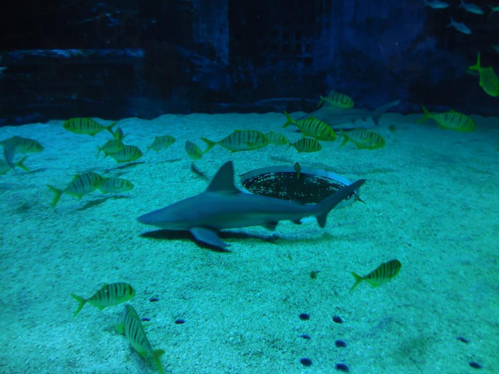 北京海洋馆 动物园一日游,住后海南锣古巷未名视界摄影主题酒店田园