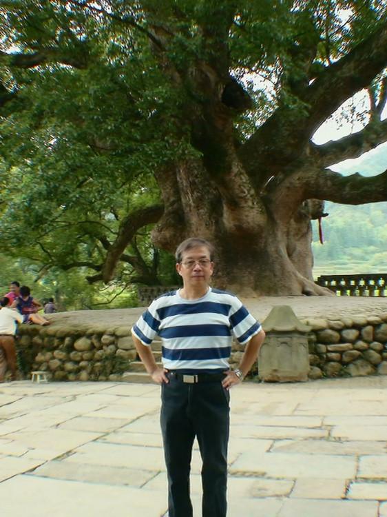 该樟树有1600多年历史,高20余米,胸径4.8米,胸围30余米,要10个成年人才能抱下。古樟树的根系特别强盛,树根附近裸露着大大小小的树根。古樟枝干横斜参差,苍劲雄浑;叶片密密层层,披青展翠。在一处树干上,生长出不同朝代的6个大枝桠。树冠幅超过3亩,过河过界,真可谓铺天盖地。树下有石碑刻着天下第一樟。哈哈,先立个石碑,名头别给抢走了。 互相争夺天下第一樟的还有婺源北部虹关村和安徽省歙县深渡镇漳潭村。深渡村的古樟树远远没有这个粗大;虹关村的古樟胸径也比此树细90厘米。但是各村依旧以各种理由对