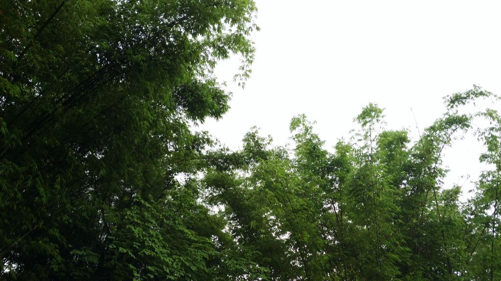 芒果树,桂圆树,菠萝蜜树……实在担心那大大的波罗蜜突然掉下来砸到