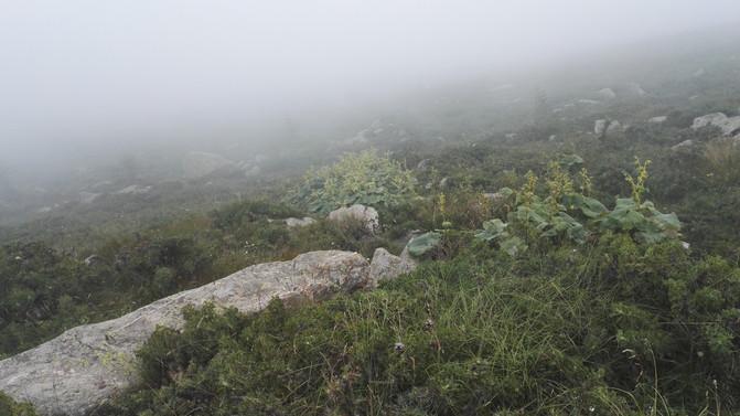 心的阿哥之五台山徒步大朝台,带你走近最真实旅途剧情攻略八图片