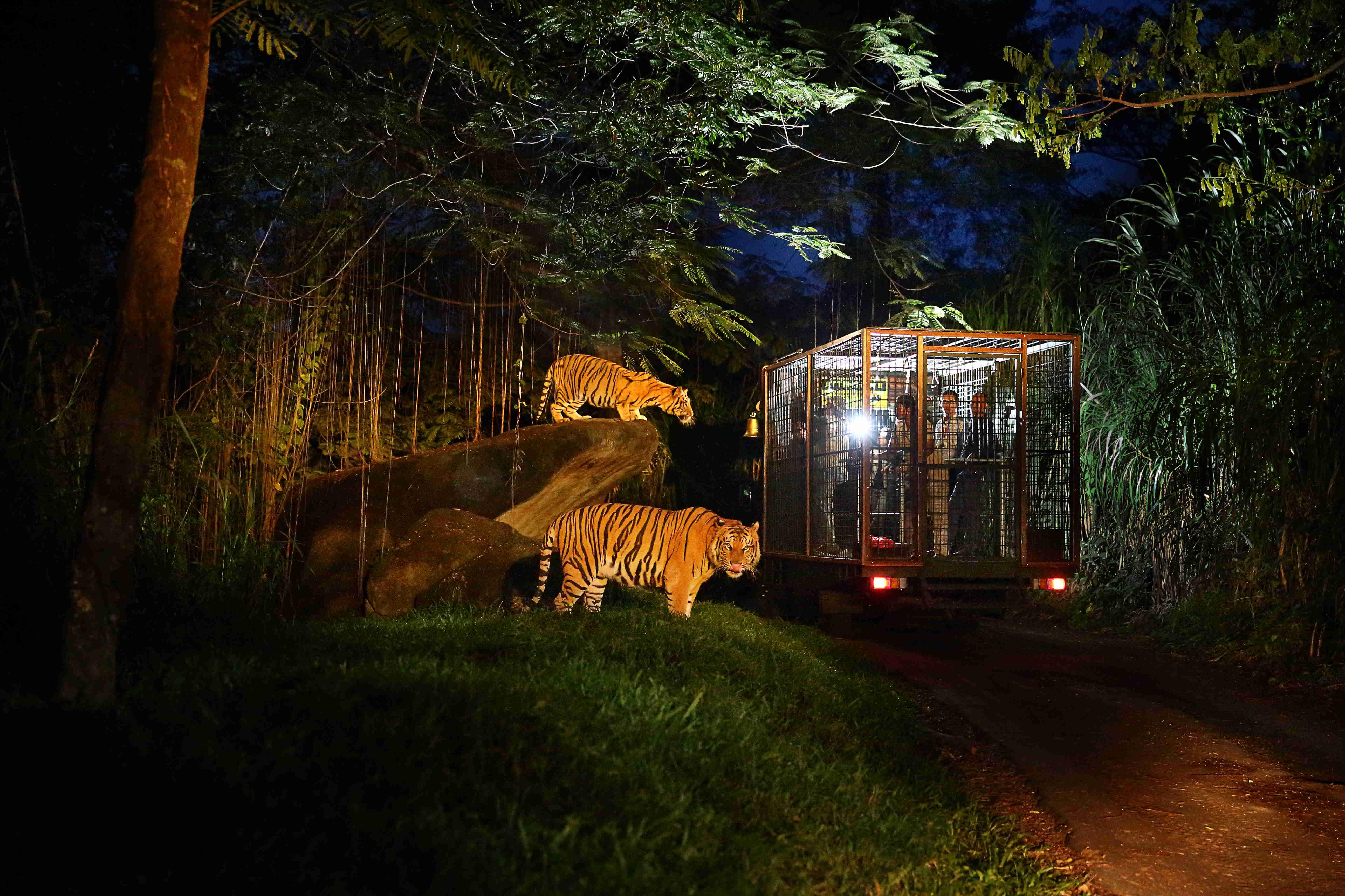 印度尼西亚 · 巴厘岛野生动物园门票