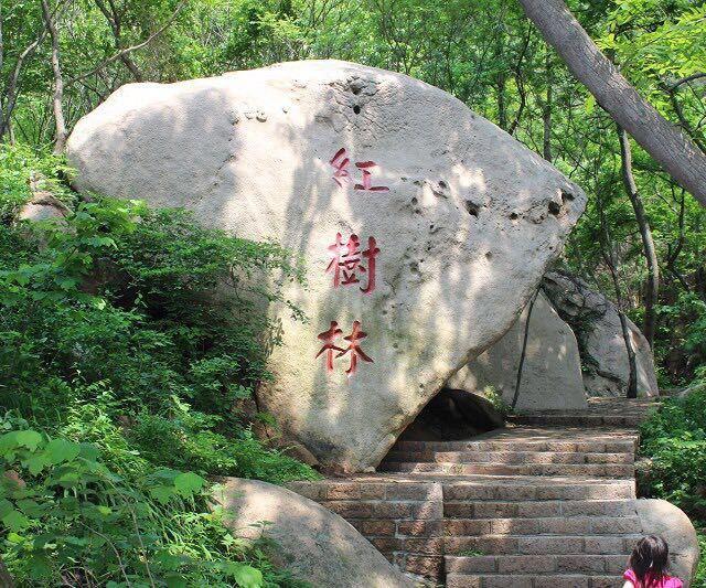 海阳招虎山国家2a级旅游景区,国家森林公园,全国农业旅游示范点.
