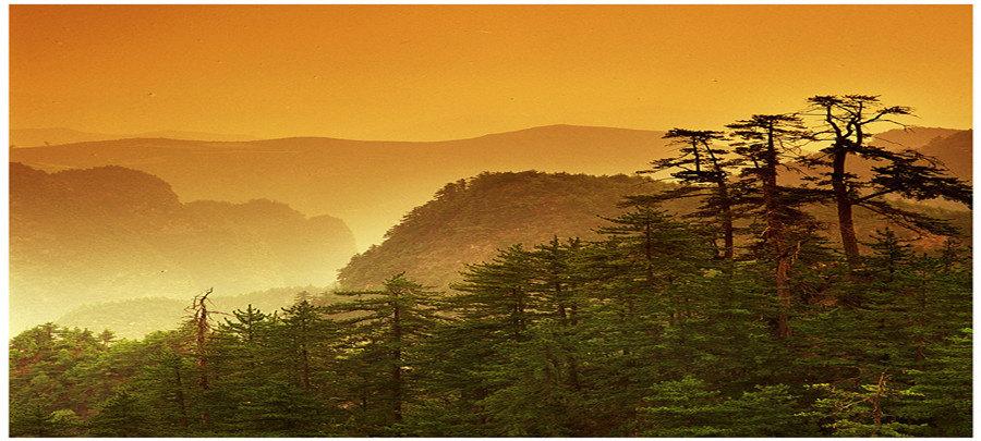 贵清山囹�a_贵清山旅游风景区