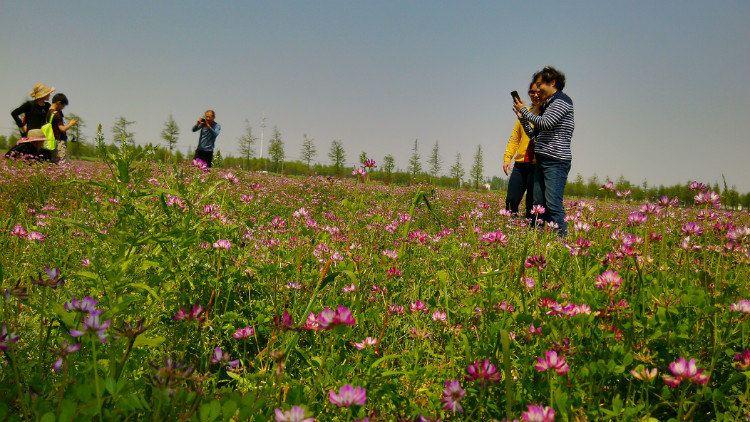 去和春天说再见 ——2015年四月松江郊游游记(下)