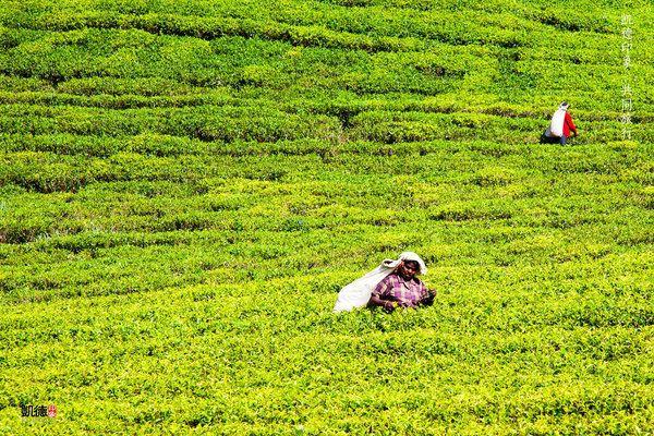 2015年最新斯里兰卡攻略摄影旅行茶园签证指战宛城攻略之11三国志图片