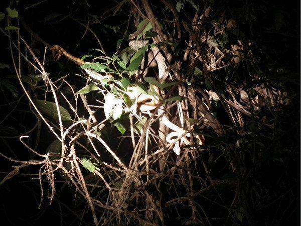 一条细蛇缠在树上,与树枝无异.