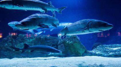 海底动物图片大全