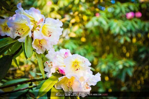 阳春三月,出门踏青去!这里就是杜鹃的王国,处处好风光图片