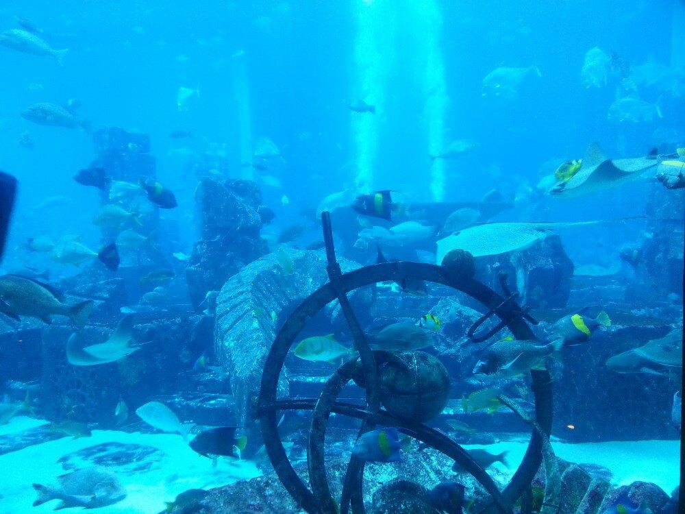 失落的海底世界-亚特兰蒂斯水族馆图片