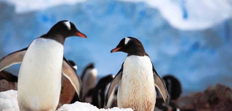 南极洲旅游攻略