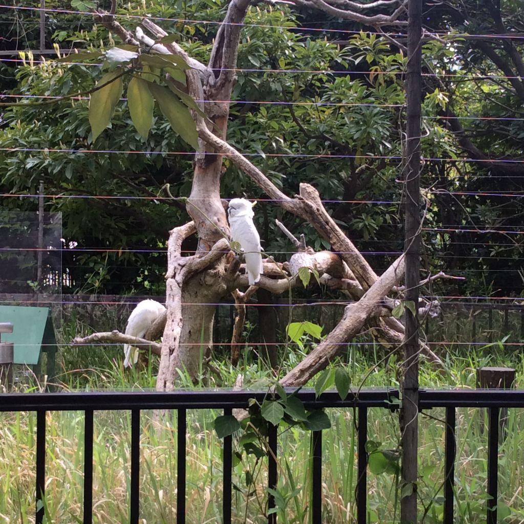 大连森林动物园的鳄鱼就是毛毛虫了