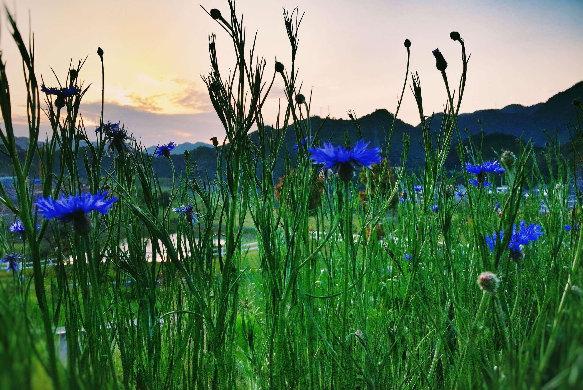 千岛湖/立夏 / 邀约阳光的灿烂给春天一个饯行
