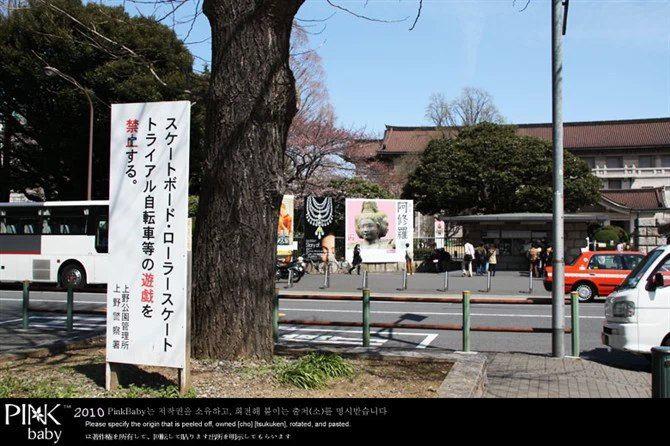 东京的春天,花开在上野公园