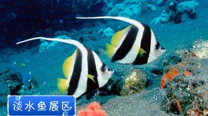 水族鱼游动桌面壁纸