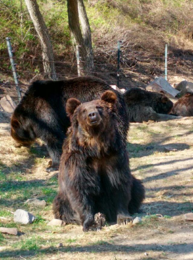 周末自驾八达岭野生动物园