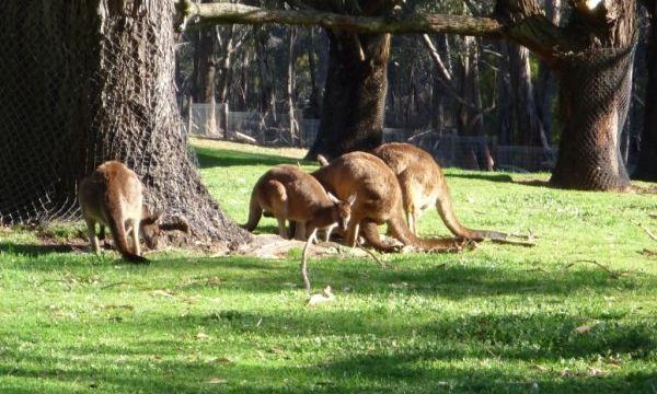 峡谷野生动物园 gorge wildlife park
