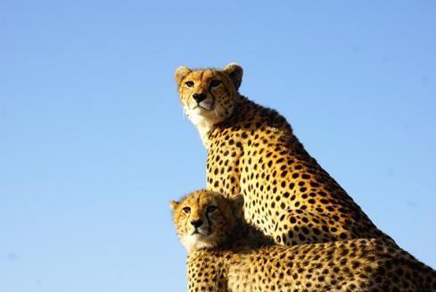 看动物,学单词,一起走进非洲大草原!