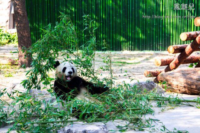 [凤麒儿]北京动物园