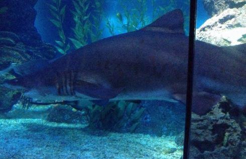 废塑料瓶手工制作 大鲨鱼