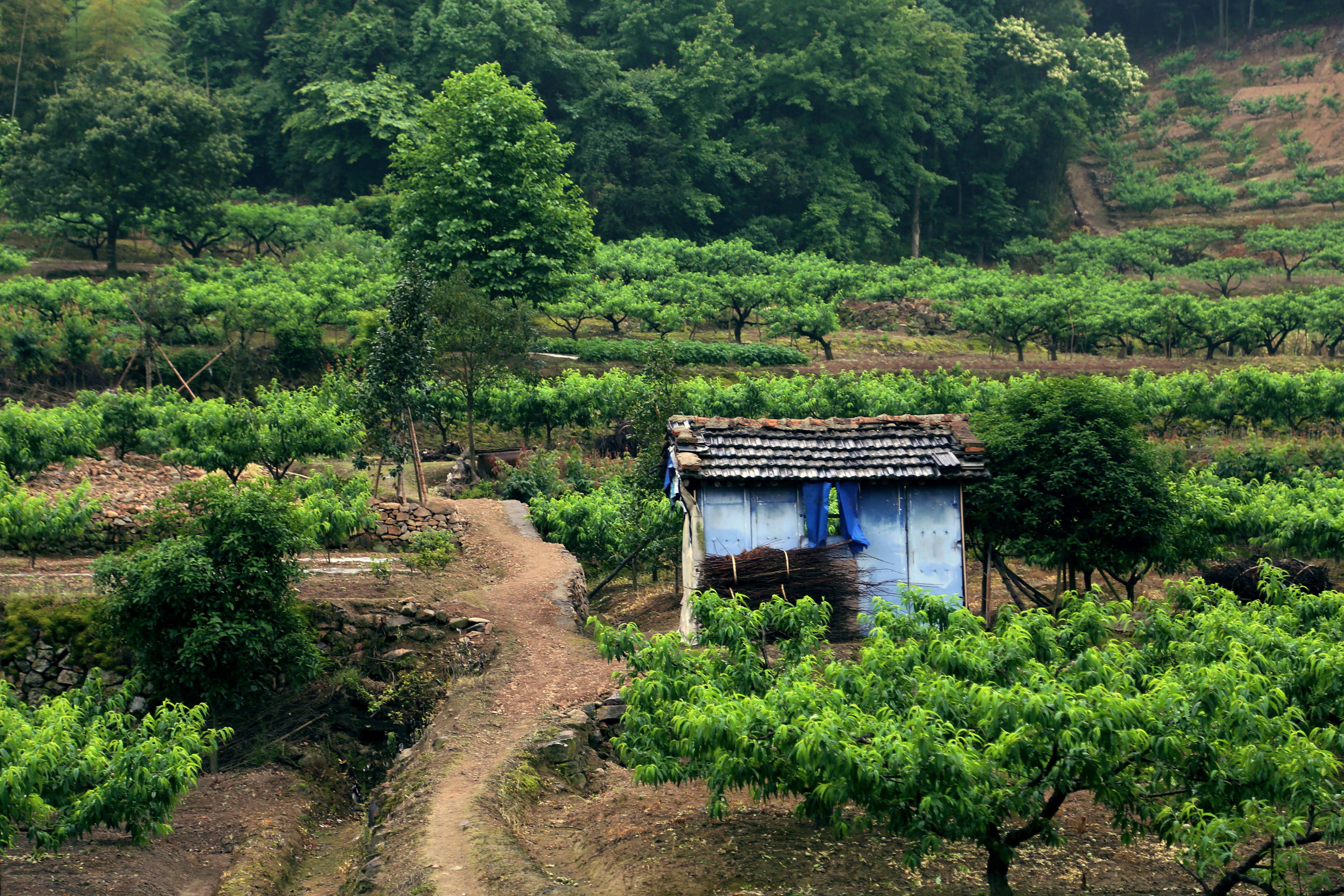 两个村之间发生林地纠纷适合《林木林地权属争议处理办法》的第十二条