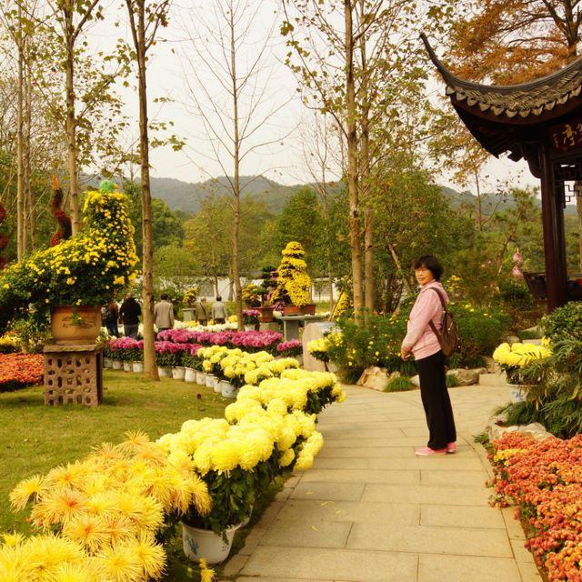 杭州植物园(10)