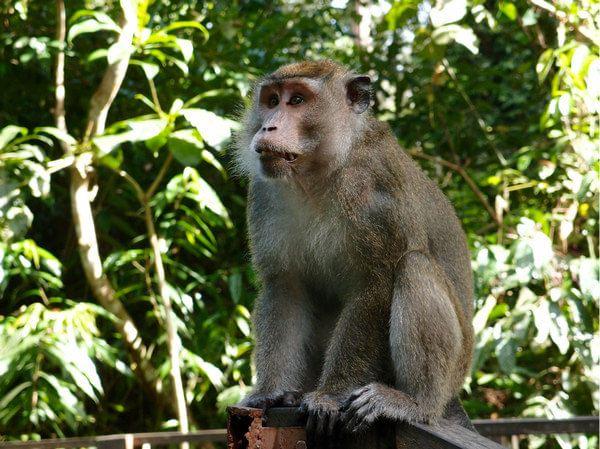 小猴-盘腿猴子