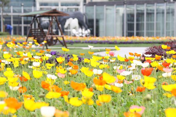 """包括:l7雕塑花园-ifs """"美,将由你定格""""摄影活动,冰悦滑冰场-花样年华"""