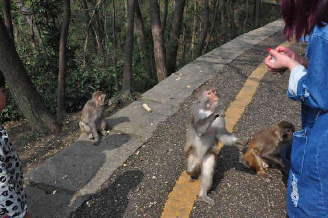 贵州旅游公园之灵山黔贵阳攻略-贵阳攻略乌龟v公园的蛙攻略游记图片
