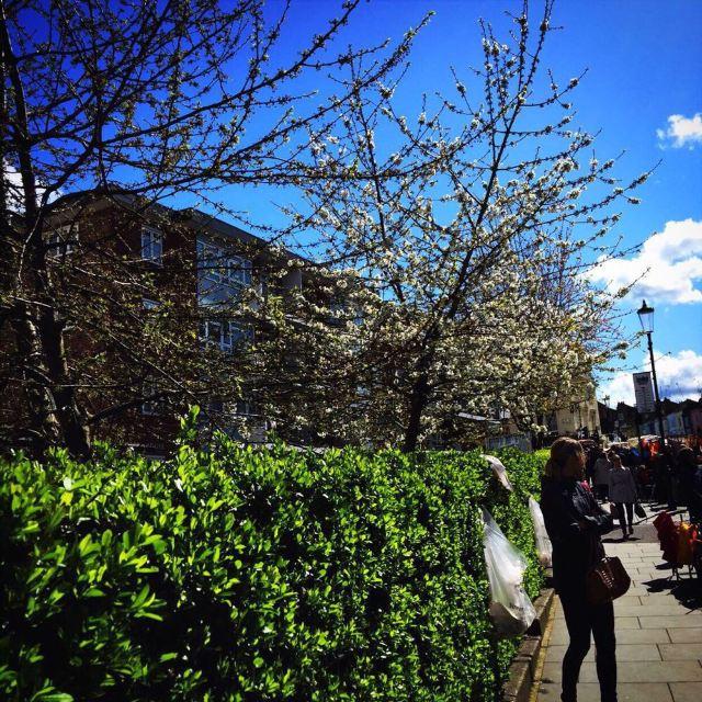 春天花儿开了