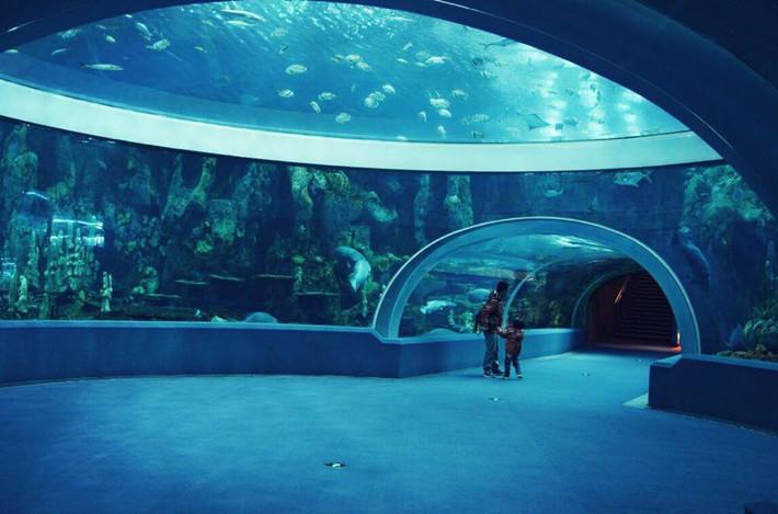 亲子,我们看鱼去--横琴珠海海洋世界宝贝游-珠攻略乱动不要图片
