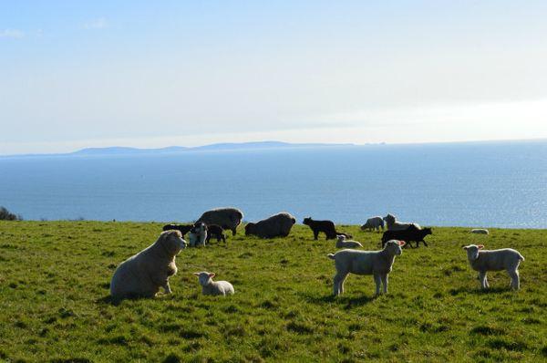 我要喂养的小羊们一共有8只,他们长得都好可爱,越看越像懒羊羊和喜羊