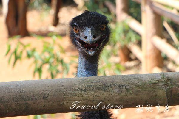 海南热带野生动植物园 与野生动物亲密接触 -