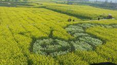 荆门沙洋油菜花节-沙洋-138****7070