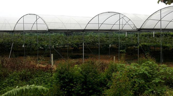 游康佳龙生态农庄,品天价葡萄 - 涨停版 - 涨停版