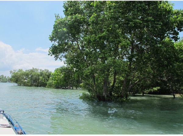 巴厘岛风情一日游玩(南湾拖曳伞 海龟岛 乌鲁瓦图神庙