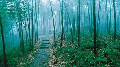 [红花岗区]竹海国家森林公园