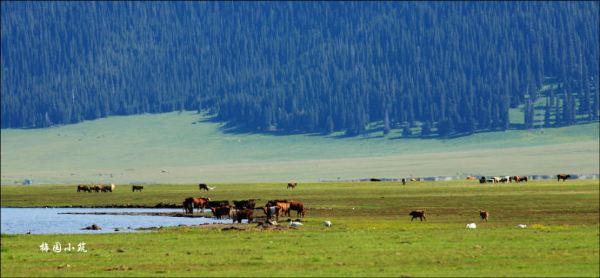 天鹅起舞马奔腾 -- 新疆伊犁赛里木湖