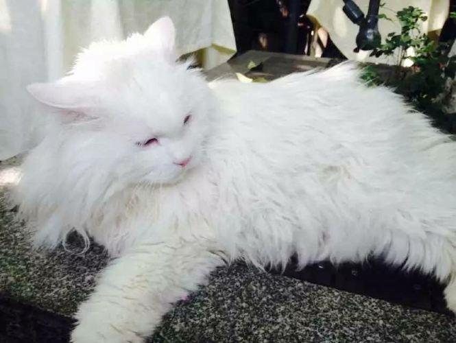可爱猫咪导航栏