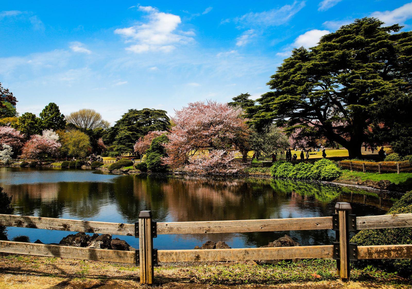新宿御苑融合日式与西式庭园风格的大型公园
