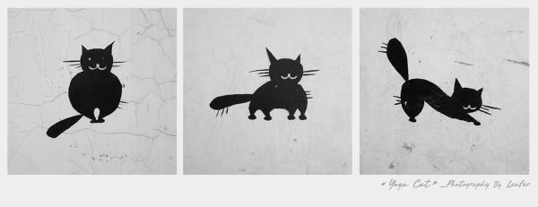 忽然,看到墙上有一只可爱的喵咪:拜月式,上犬式,下犬式,它不就是在练图片