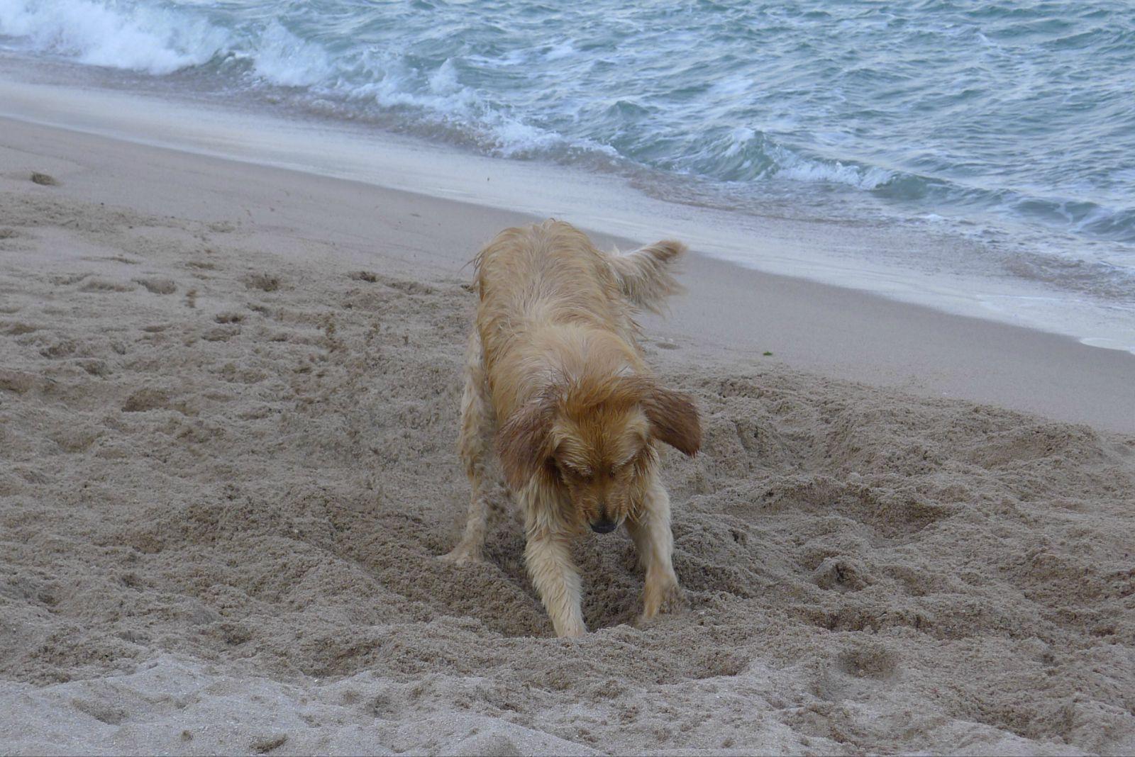 海鲜 海滩 海浪=海皮——青岛日照游