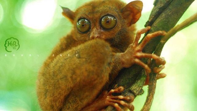 眼镜猴游客中心门票,薄荷岛眼镜猴游客中心攻略/地址