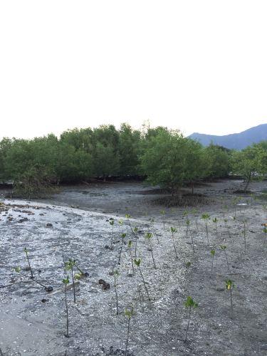2015年八月轻松攻略游-惠东盐洲岛a攻略海滩-铁血卷土重来联盟之旅图片