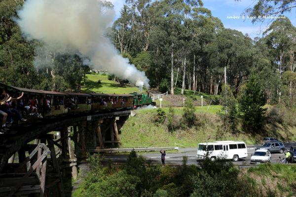 南半球的春天:墨尔本,菲利普岛,蒸汽小火车puffing billy,大洋路,黄金