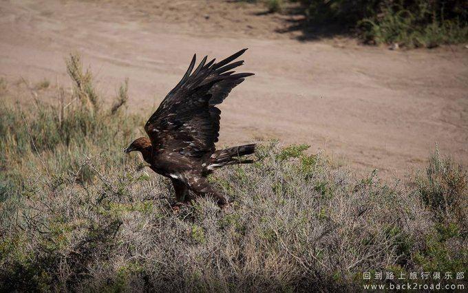 空旷的地方,观赏老鹰