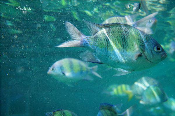 不会游泳玩普吉:普吉岛自由行(芭东海滩,皮皮岛蛋岛,斯米兰一日游